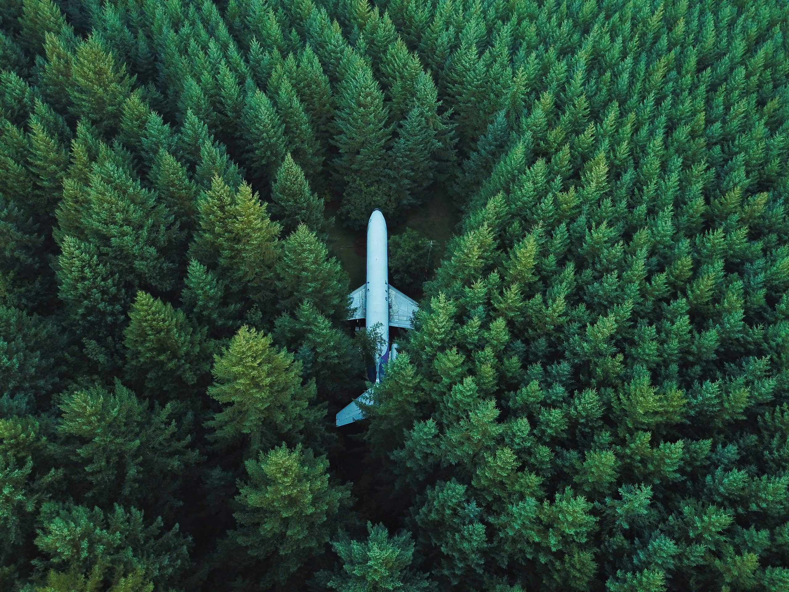 Airplane lost in forest